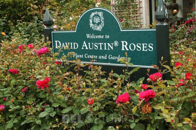 питомник роз Дэвида Остина